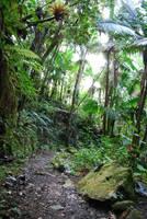 Rocky Jungle Path by CompassLogicStock
