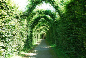 Tree-lined Garden Path Wide by CompassLogicStock