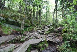Rocky Forest Trail 3 by CompassLogicStock