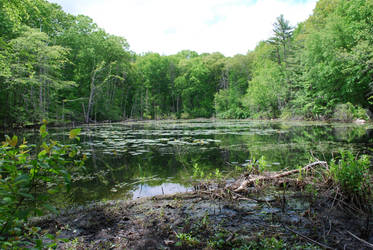 Swamp by CompassLogicStock