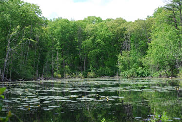 Swamp 2 by CompassLogicStock