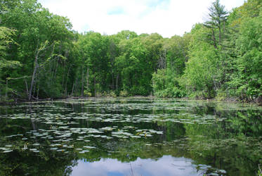 Swamp 3 by CompassLogicStock