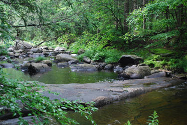 Forest River by CompassLogicStock