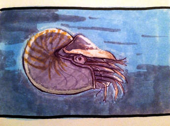 Nautilus by LostThyme