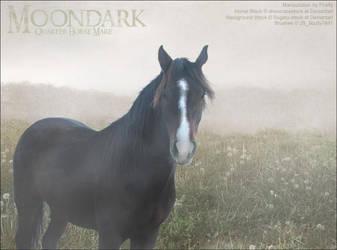 Moondark by Moonlight-Mystique