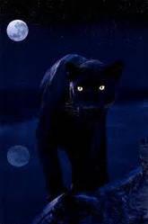 Panther1 by Enterprisecv-6
