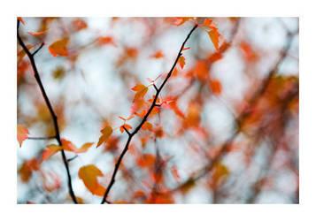 Fall by fd9z0r
