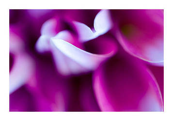 Soft Color by fd9z0r