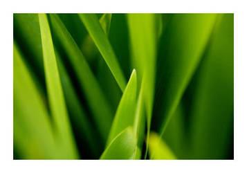 Green by fd9z0r