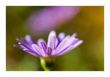 Purple by fd9z0r