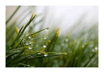 Rainy Day 2 by fd9z0r