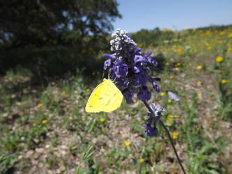yellow butterfly by kellyember