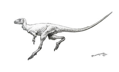 Eocursor parvus by Xiphactinus