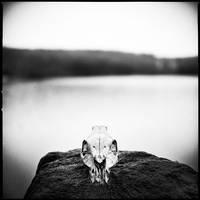 Winter's Bone by yup12