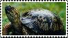 Turtle Stamp by Atom45