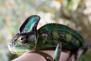 Chameleon by lemonyellowsun