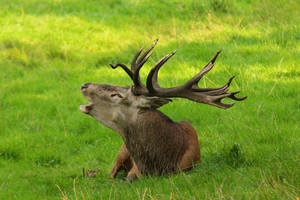 Red Deer 2 by landkeks-stock