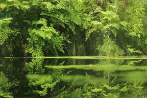 Jungle Lake 2 by landkeks-stock