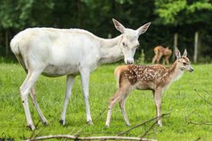Red Deer 15 by landkeks-stock