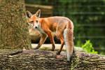 Fox 3 by landkeks-stock