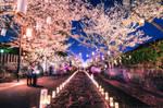 Honmyo-ji Temple by DallasNagata