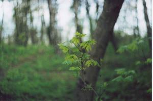 greenlight by lenakudrei
