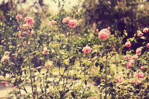 roses-II by lenakudrei