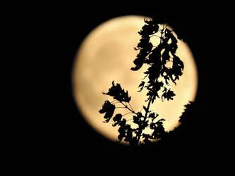 Midnight by Ellynovia