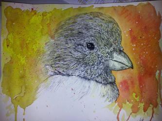 Juste un canari by Naraxir-Art