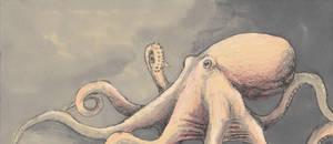 Octopus by DeferoMortis