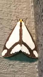 Sleepy moth by Kyria-Neko-Chan
