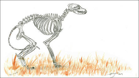 Field Of Dead Grass by liquidonyx