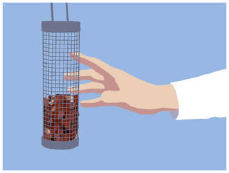 Grab the bird feeder by chibibecca