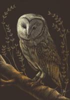 Barn Owl by HybridTea