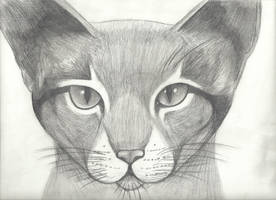 Cat Sketch of Noble Proportions by ScarheartPics