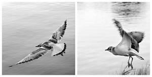 Birds ... by vlastas