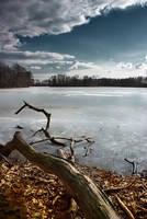 Old Branch In the Winter Sun by vlastas