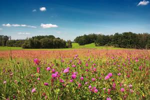 Simple Look Through the Summer by vlastas