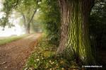 Old Tree by vlastas