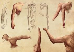 Arm Study by ArisT0te