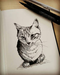 Drawing of my cat by Rogaan