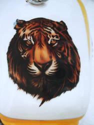 Tiger by danSkie187