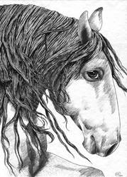Andalusian Horse by Catti-brie1990