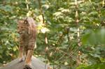 Lynx 3 by Lakela