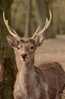 Deer Stock 8 by Lakela