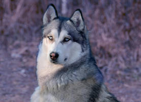 Dog 2 by Lakela