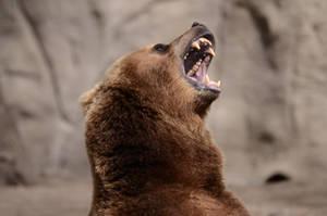 Bear 2 by Lakela