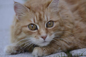 Cat 28 by Lakela