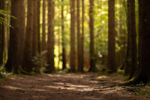 Slovenia Forest 1 by Lakela
