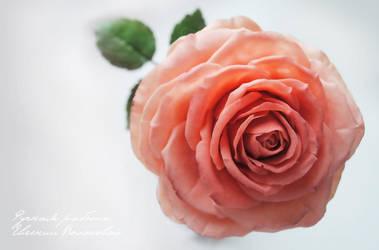 My handmade polymer clay rose. by V-eva